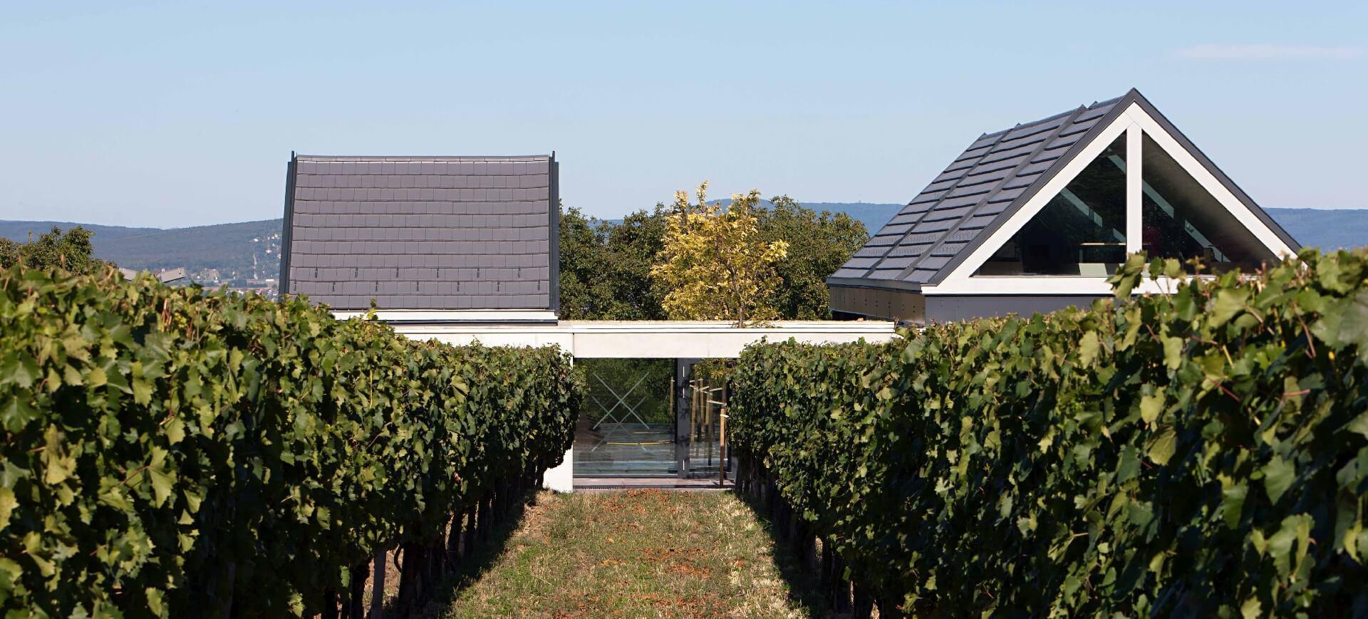 Etyeki Kúria tetői a szőlő felett